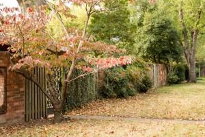 garden-park MG 7729